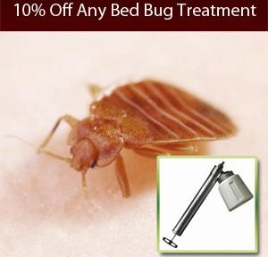battle-a-bug_callout-termite_11-15-12-0